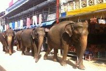 Йога тур на Шри Ланку 2015